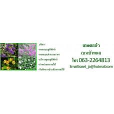 บริการรับดูแลสวน บริการรับจัดสวน บริการดูแลสวน รับจัดสวน ดูแลสวนนนทบุรี ดูแลสวน ปูหญ้า เกษตรจ๋า ตัดต้นไม้  จำหน่ายต้นไม้ ปรับปรุงภูมิทัศน์