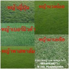 หญ้าจัดสวน