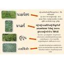 ไร่หญ้า Ammar ผลิตหญ้า นวลน้อย ญี่ปุ่น มาเลย์ เป็นหลัก ขายหญ้า มีบริการส่ง รับปูหญ้า